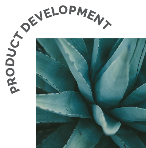 Product Development for Beauty and Wellness Brands